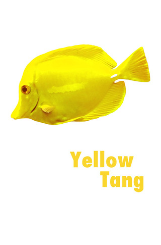 Small_320_003-yellowtang