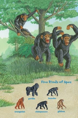 Small_320_2-ts-kia-apes