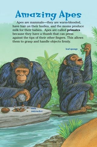 Small_320_3-ts-kia-apes