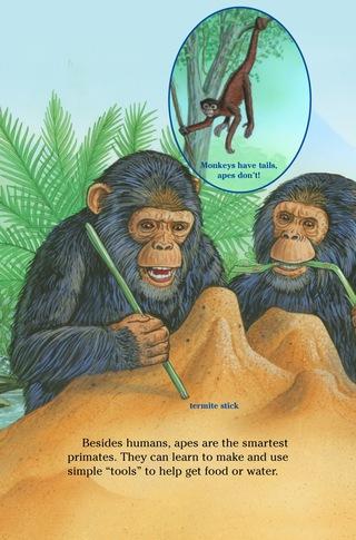 Small_320_4-ts-kia-apes