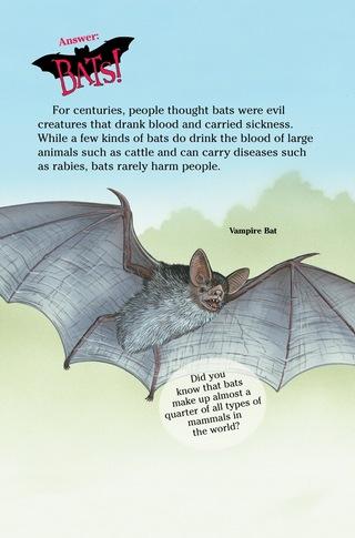 Small_320_3-bats