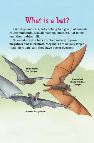 Small_320_4-bats
