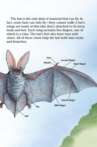 Small_320_5-bats
