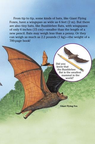 Small_320_6-bats