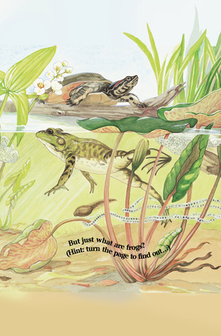 Small_320_2-kia-frogs-eferrer