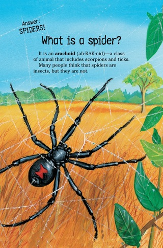Small_320_3-kia_spiders