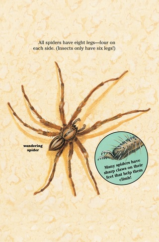 Small_320_5-kia_spiders
