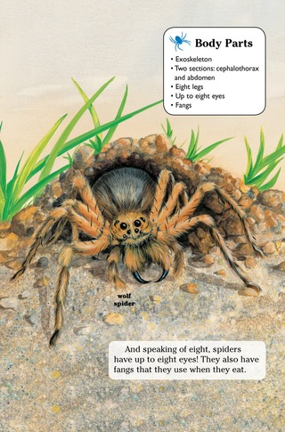 Small_320_6-kia_spiders