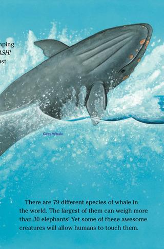 Small_320_2-kia-whales-farfaria-eferrer