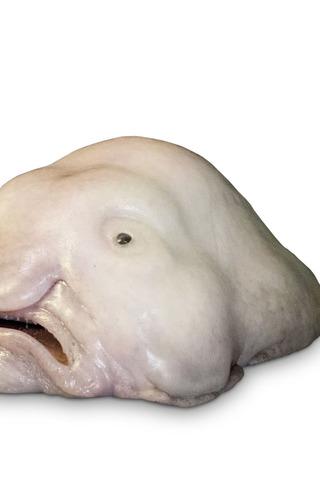Small_320_4-page-4-final-blobfish-wildandweirdanimals-eferrer