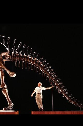 Small_320_4-final-abdo-dinosaurs-apatosaurus-ad