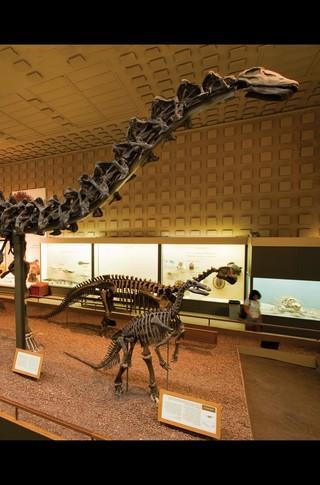 Small_320_12-final-abdo-dinosaurs-apatosaurus-ad