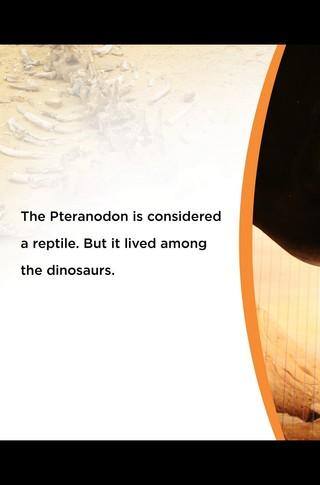 Small_320_3-final-abdo-dinosaurs-pteranodon-ad