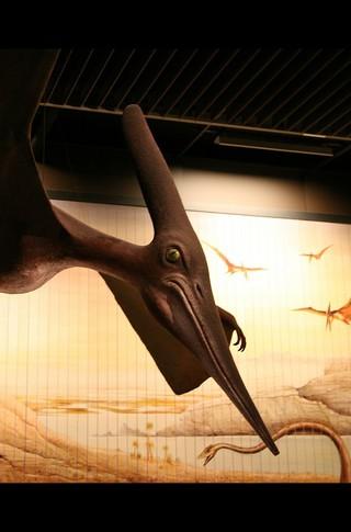 Small_320_4-final-abdo-dinosaurs-pteranodon-ad
