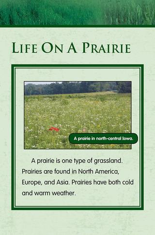 Small_320_5-final-habitat-grasslands-ad3