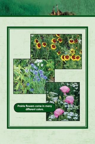 Small_320_8-final-habitat-grasslands-ad