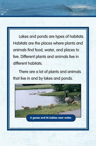 Small_320_2-final-habitat-lake_ponds-adc