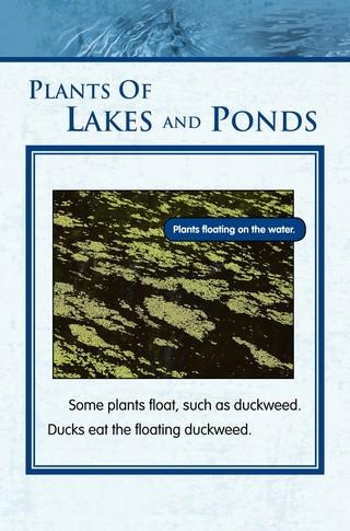 Small_320_5-final-habitat-lake_ponds-adc