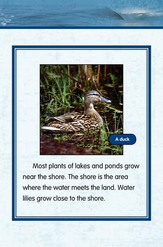 Small_320_6-final-habitat-lake_ponds-adc