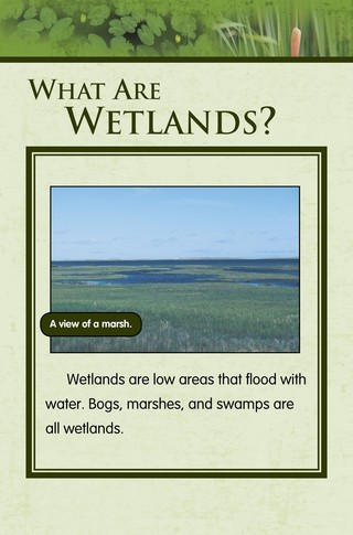 Small_320_1-final-habitat-wetlands-ad