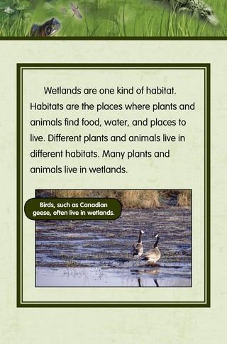 Small_320_3-final-habitat-wetlands-ad