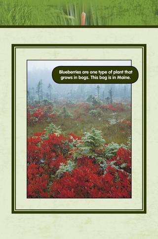 Small_320_4-final-habitat-wetlands-ad