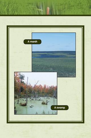 Small_320_8-final-habitat-wetlands-ad