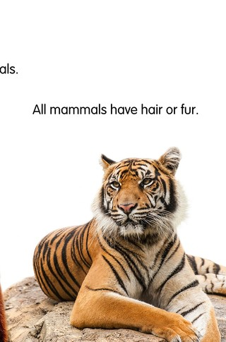 Small_320_2-final-all_about_animals-adiesta