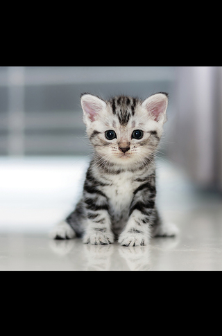 Small_320_2_baby_animals_kittens_5c096f4800ff485a6a000062