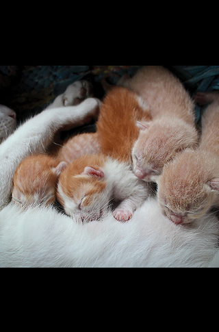 Small_320_4_baby_animals_kittens_5c096f4800ff485a6a000062