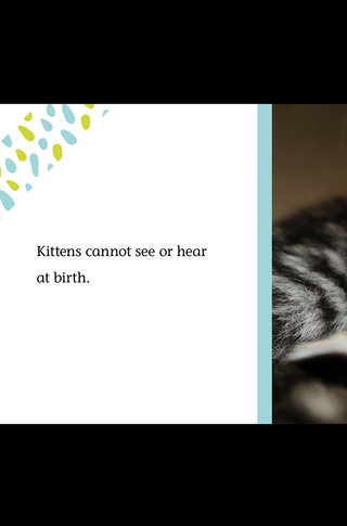 Small_320_5_baby_animals_kittens_5c096f4800ff485a6a000062