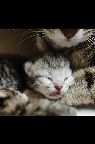 Small_320_6_baby_animals_kittens_5c096f4800ff485a6a000062