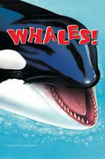 Know It Alls: Whales
