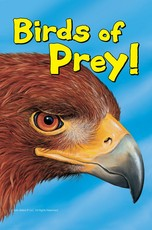 Know It Alls: Birds Of Prey