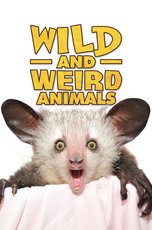 Wild and Weird Animals